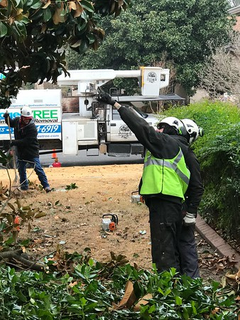 ANDREA CHANCELLOR/Special to the Phoenix<br /> Tree crews assess the damage at a work site.