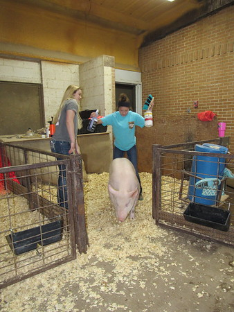 Staff photo by Cathy Spaulding<br /> Fort Gibson eighth-graders Koie Nail, left, and Maddison Alexander try to move a stubborn pig out of its pen. They wanted to wash and prepare it for the Fort Gibson Livestock Show.