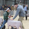 Staff photo by Cathy Spaulding<br /> Alanna Gonzales of Haskell 4-H Club braces her lamb while judge Spencer Scotten examines it during the Muskogee County Junior Livestock Show on Wednesday.