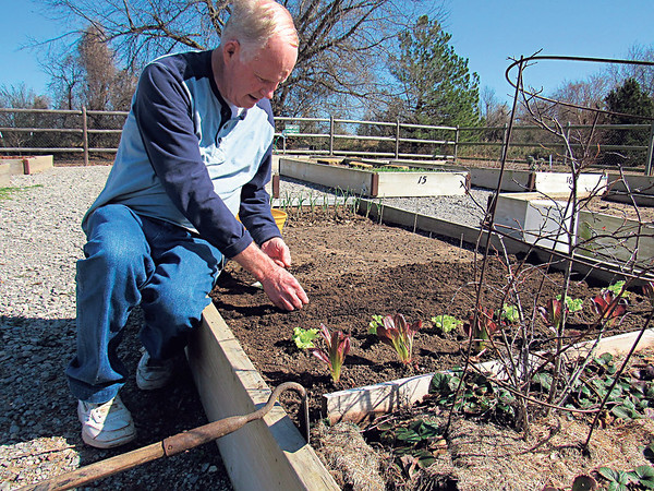 Staff photo by Cathy Spaulding<br /> Retired federal employee Ed Farris plants spinach seeds at the Civitan Park community garden Monday afternoon.