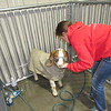 Staff photo by Cathy Spaulding<br /> Kaci Murray of Wagoner FFA washes her goat before showing at the Muskogee Regional Junior Livestock Show on Tuesday. This is the first year the regional show has been held at Hatbox Field hangars.