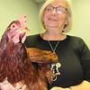 Staff photo by Cathy Spaulding<br /> Eileen Van Kirk holds Scarlett, one of the chickens she keeps — and spoils — at her house.
