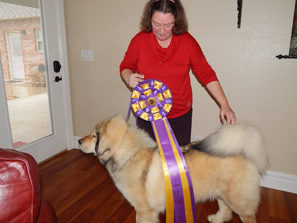 KENTON BROOKS/Muskogee Phoenix<br /> Muskogee's Deborah Mayer shows off a ribbon for Best of Breed that her Tibetan Mastiff Gemma won in 2017. Gemma has also been chosen as the No. 1 mastiff in the American Kennel Club championships in 2017 and the youngest of her breed to win a grand championship.