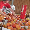 CATHY SPAULDING/Muskogee Phoenix<br /> Kyle Livesay of Livesay Orchards stocks peaches at the orchard store. He said peaches were abundant this year.