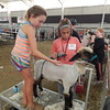 Staff photo by Cathy Spaulding<br /> Briley Stoll, 10, left, gets on a stand to help Macie Edgmon, 11, shear a lamb at Be a Champ Show Cattle and Lamb Camp.