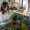 Staff photo by Mike Elswick<br /> Meagan Ferren works on an arrangement Tuesday on the opening day of her new business, Poppy's Garden. Located at 200 South Main St., the floral shop is in the same storefront as Mattie Jane's on Main restaurant, which also opened on Tuesday.