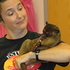 Staff photo by Cathy Spaulding<br /> A kinkajou named Honey licks a lollipop while resting in the arms of Laura Waggoner of Extreme Animals during a presentation Friday at Q.B. Boydstun Library.