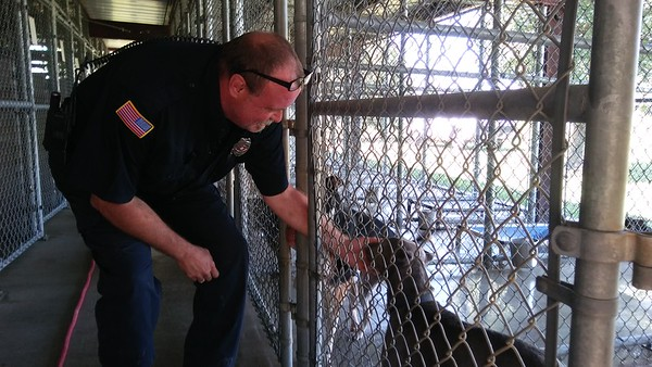 Staff photo by Wendy Burton<br /> Muskogee Animal Control Officer Phil Blair stops to scratch a dog's nose at the shelter Wednesday afternoon. Adoption fees have been reduced to $30 for cats and dogs through July 7, thanks to recent community donations, he said.