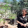 Staff photo by Cathy Spaulding<br /> Karen Coker plans to enter this plant in the Oklahoma State Fair. She grew it from a cutting from a plant she grew in North Carolina.