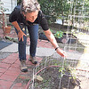 Staff photo by Cathy Spaulding<br /> Karen Coker grows tomatoes, peppers and herbs in her backyard garden. She had a landscaping business for 15 years.