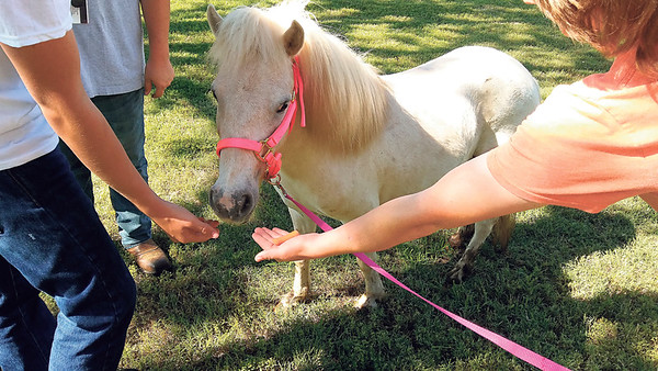 Staff photo by Wendy Burton<br /> Teenagers who are getting treatment at the Cherokee Nation's Jack Brown Adolescent Treatment Center feed carrots to Ambrosia — one of three miniature horses donated to the Cherokee Nation to provide equine therapy to Native children.