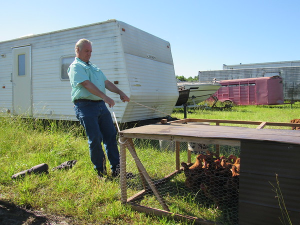 Russell Sain pulls his caged chickens to a grassy area. He said he keeps about 60 grass-fed chickens.
