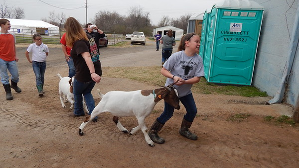 Staff photo by Cathy Spaulding<br /> Vian sisters Callie Skaggs, right, and Cierra Skaggs struggle to get their goats into the Muskogee Fairgrounds arena for the Muskogee Regional Junior Livestock Show weigh-in Tuesday. The girls are in their first year of showing animals.