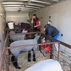 Staff photo by Cathy Spaulding<br /> Warner students, from left, Blaize Herriman, Brooklyn Herriman and Callee Good prepare their sheep for the Muskogee Regional Junior Livestock Show on Wednesday.