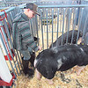 CATHY SPAULDING/Muskogee Phoenix<br /> Wyatt Kirkley of Porter follows his hog around its pen as he tries to spray and brush it. Wyatt was preparing for the Berkshire hog show Monday night.