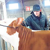 KENTON BROOKS/Muskogee Phoenix<br /> Brett Cotton of Huntsville, Arkansas, trims the hair on Rue, a Hereford heifer, in preparation for the cattle show at the Muskogee Regional Junior Livestock Show Friday at the Hatbox Hangars.