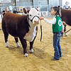 KENTON BROOKS/Muskogee Phoenix<br /> Aliyah Campbell, 9, of Checotah holds Randa, her Hereford heifer, during Friday's heifer show at the Muskogee County Junior Livestock Show.
