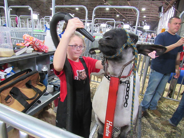 Staff photo by Cathy Spaulding<br /> Danika Spaulding dries her crossbreed lamb on Wednesday before the Muskogee Regional Junior Livestock show's lamb competition. She showed three lambs at the show.