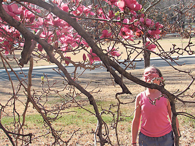 """Staff photo by Cathy Spaulding Trees and flowers are beginning to bloom at Honor Heights Park. Assistant Parks and Recreation Director Rick Ewing said star magnolia trees are showing their big blooms. Wild plum trees are blooming, and pear trees are """"just starting."""" Huge tree blossoms dazzle Raelynn Thurber, 9, of Muskogee, during a visit to Honor Heights Park on Friday."""