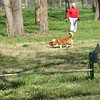 Staff photo by Cathy Spaulding<br /> Katie, a corgi-mix breed, sniffs around Muskogee's new Bark Park under the watchful eye of owner Mary Oslin on Tuesday morning. In front of the pair is one of the park's dog jump agility features. The park is behind the Randall Ferguson Insurance Agency, 1131 S. Main St.
