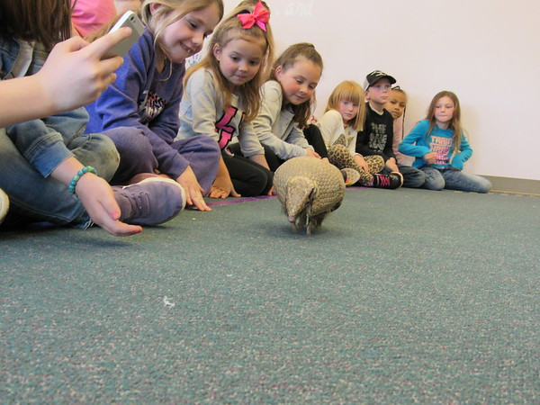 CATHY SPAULDING/Muskogee Phoenix<br /> An armadillo scurries past children at Q.B. Boydstun Library. The Oklahoma City Zoo brought the armadillo and three other animals to the library for a spring break visit.