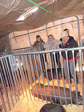 Checotah exhibitors and family members, from left, Callee Good, Halee Dendy, Robyn Dendy and Shanelle Shepherd check on pigs kept under tarps and heat lamps at the Muskogee Regional Junior Livestock Show.