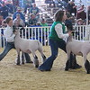 CATHY SPAULDING/Muskogee Phoenix<br /> Tyann Stacy of Oktaha, left, and Emma Gifford of Fort Gibson brace their sheep while showing at the Muskogee Regional Junior Livestock Show on Thursday.