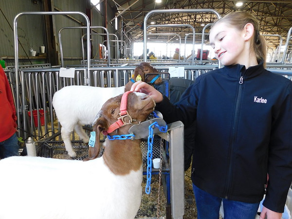 KENTON BROOKS/Muskogee Phoenix<br /> Karlee Glover of Checotah nuzzles her boer goat Tiny before they go to the ring and compete at the Muskogee Regional Junior Livestock Show at the Hatbox Hangar on Wednesday. Wednesday's competition was divided into two categories: doe kid and market goat. Glover competed with Tiny in doe kid.