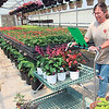 CATHY SPAULDING/Muskogee Phoenix<br /> Blossom's Garden Center co-owner Lora Durkee fills a customer's online order. COVID-19 has prompted the business to move to online/curbside only.