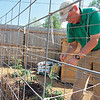 CATHY SPAULDING/Muskogee Phoenix<br /> Papilion horticulturist-naturalist-zoologist Tom Roberts secures a frame for tomato plants in the Papilion's Beatrice Sheddan Children's Garden. New plantings, new gardens and butterflies will be featured at the Papilion during its Mother's Day weekend observance.