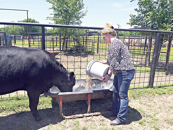 RONN ROWLAND/Muskogee Phoenix<br /> Tammy Cruise, co-owner of Cruise Cattle Company — Triple C Farm in Haskell with her husband Robert, feeds one of her Black Angus steers that has been selected to head to the processor in July. The Cruises are one of three area ranchers that are members of the Oklahoma Cattlemen's Association that are selling beef directly to the consumer.