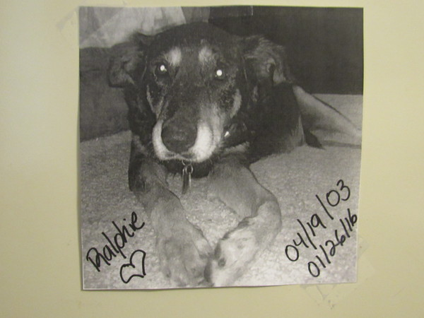 Staff photo by Cathy Spaulding<br /> A picture of Marcella Paige's dog Ralphie hangs in her office. Ralphie was a rescue dog that Paige's family fostered and then adopted.
