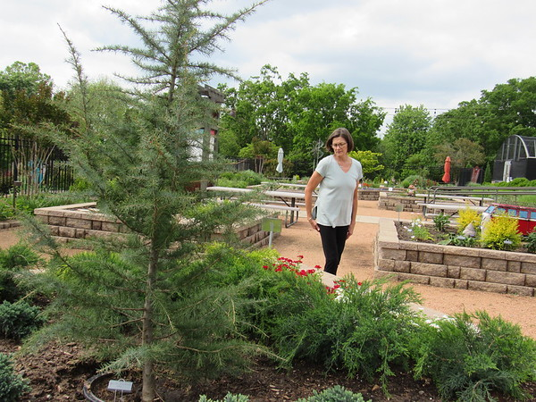 CATHY SPAULDING/Muskogee Phoenix Papilion Manager Katherine Coburn walks around the raised flowerbed she planted honoring Canada. Papilion flower beds are honoring Gardens of the World.