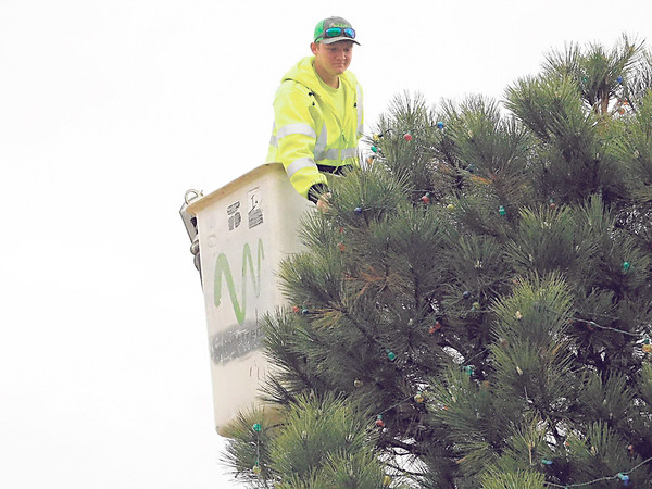 Ethan Weber of the Checotah Recreation Department strings lights on one of the 34 trees that will be decorated on South Broadway. Citizens and groups reserve a tree they can decorate. This Christmas tradition started in 2016 from an idea by Ward 1 city councilor Mike Key and Mayor Daniel Tarkington. Light poles in downtown also have been decorated for the holiday.