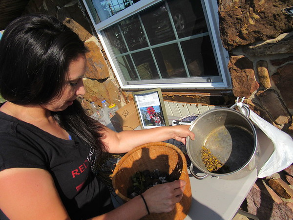 Staff photo by Cathy Spaulding<br /> Britteny Cuevas shows pecans she uses to make a green/brown dye for her baskets. She said she grinds the shells.