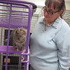 CATHY SPAULDING/Muskogee Phoenix<br /> A cat exchanges glances with Dorothy Farmer, executive director of Protecting Animal Welfare Society. PAWS will have an open house and costume contest to mark its 20th year in its current facility.