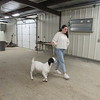 CATHY SPAULDING/Muskogee Phoenix<br /> Fort Gibson senior Anna Hardy takes her market goat on a walk through the school's ag barn addition.