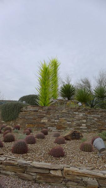 Phoenix Desert Botanical Garden March 2014