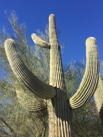 Phoenix Desert Gardens