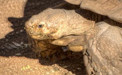 Phoenix Herpetological Society Critters November 07 2015 013