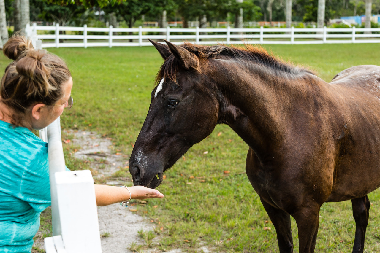 Phoenix at her new home in Loxahatchee Groves, on Sunday, October 30, 2016, the day after her arrival from ERAF in Martin County. (Joseph Forzano / Deep Creek Films & Photography)
