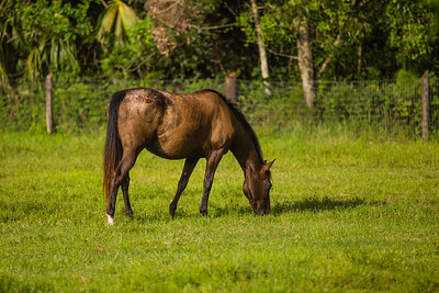 On the farm with Phoenix and her pasture pals in Loxahatchee Groves on Monday, August 4, 2017. (Joseph Forzano / Deep Creek Imagery)