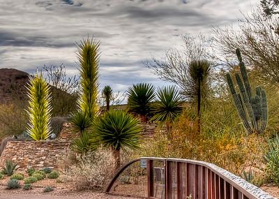 desert-botanical-garden-1-2