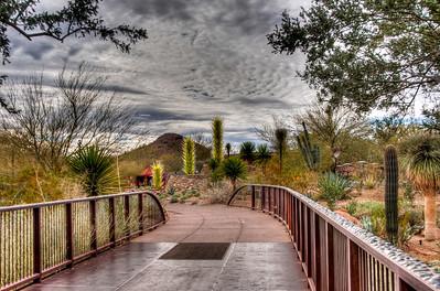 desert-botanical-garden-1