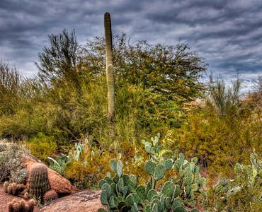 desert-botanical-garden-4-1