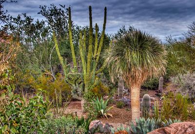 desert-botanical-garden-2-1