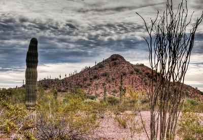 desert-cactus-ocotillo-1