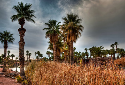 papago-park-palm-trees-1