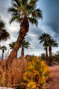 papago-park-palm-trees-2-2