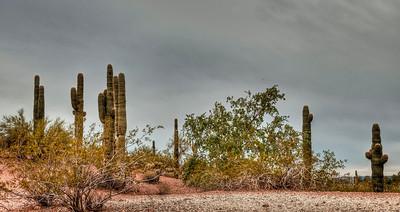 cloudy-desert-cactus-1